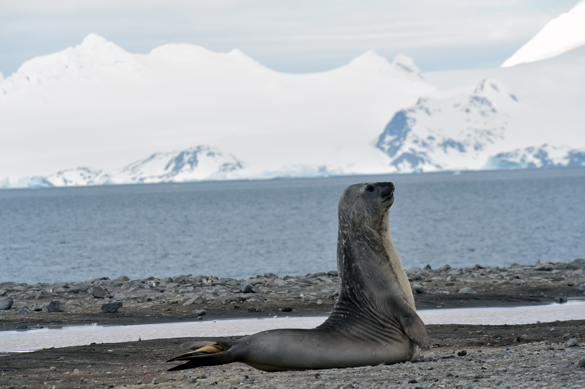 Antarctica::Vijay Ramaswamy Images